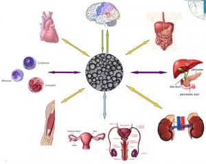 hipoxia-obesidad1