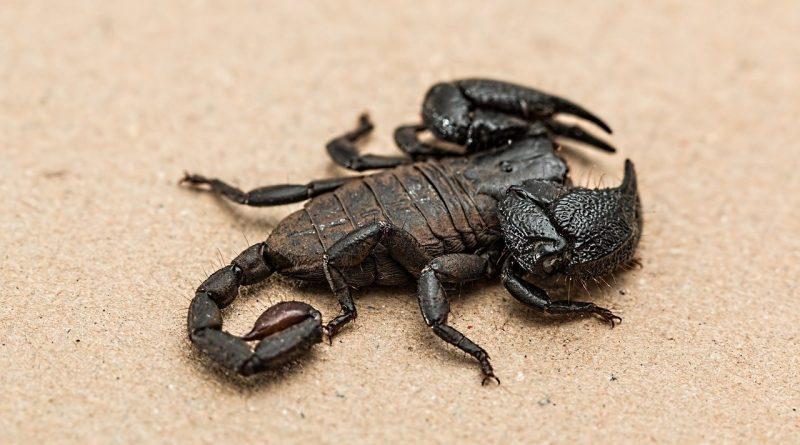 escorpión y cáncer